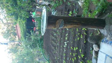 Foto 8 - Gartenanlage