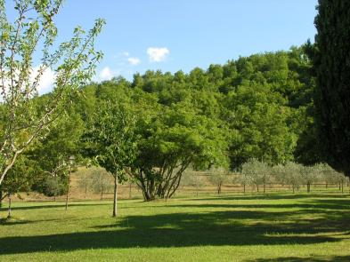 Photo 7 - Land planted with trees