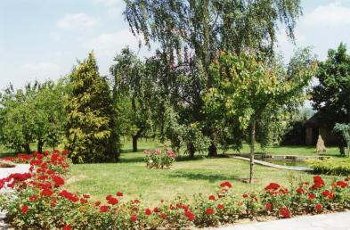 Photo 3 - Treed and landscaped land