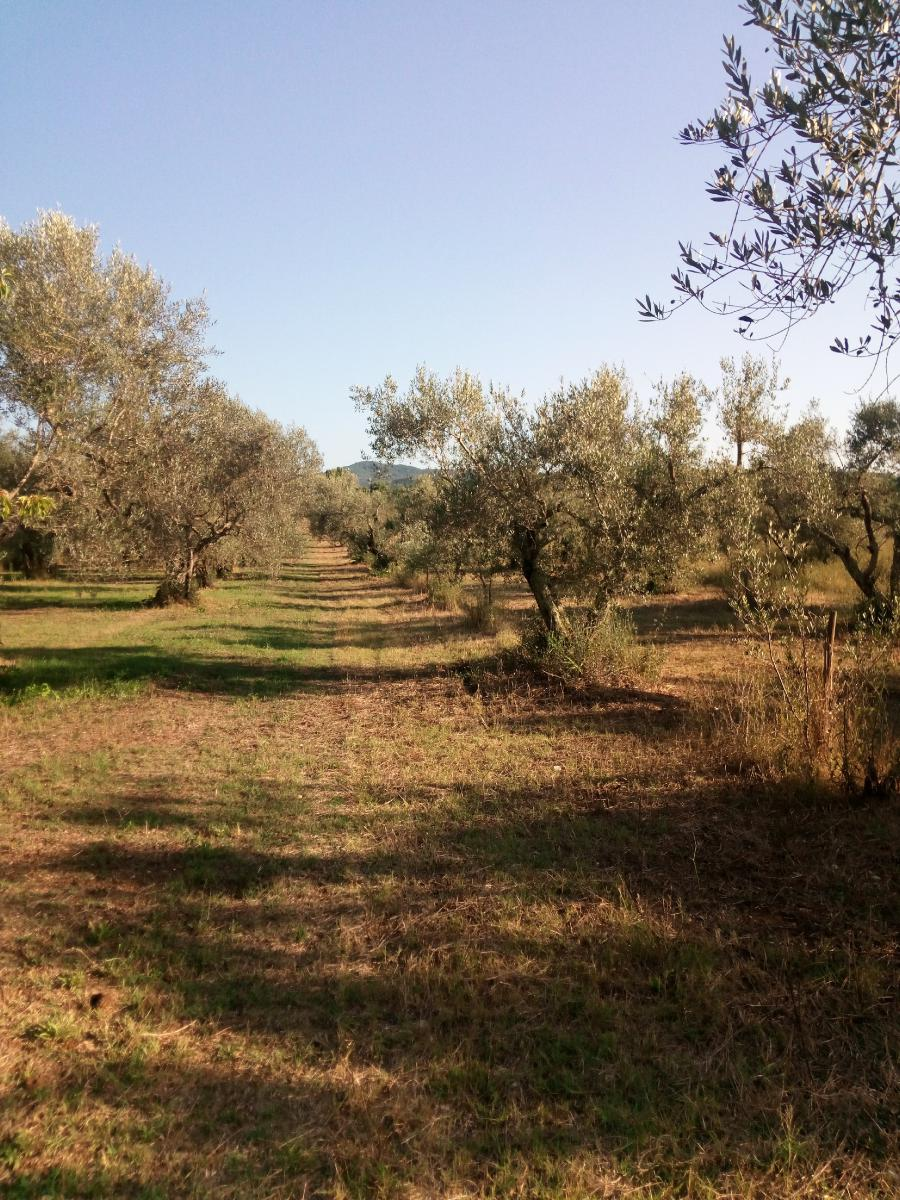 Farm land in 01010 BARBARANO ROMANO