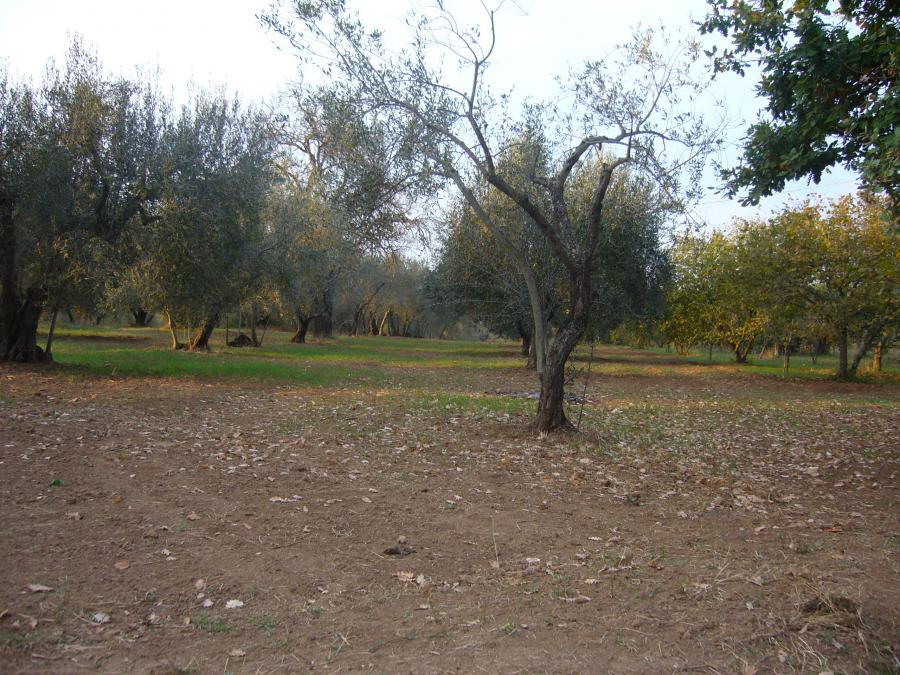 Photo 5 - Land planted with trees